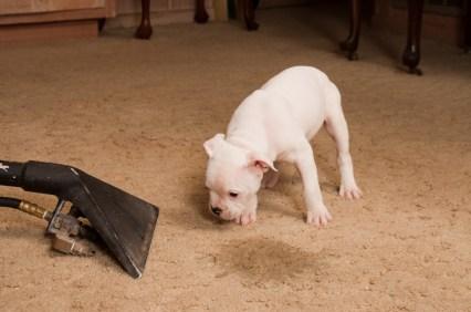 מהו ההבדל בין ניקוי חיטוי ועיקור מספות שטיחים ומזרונים
