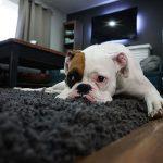 הסרת כתמי שתן משטיחים